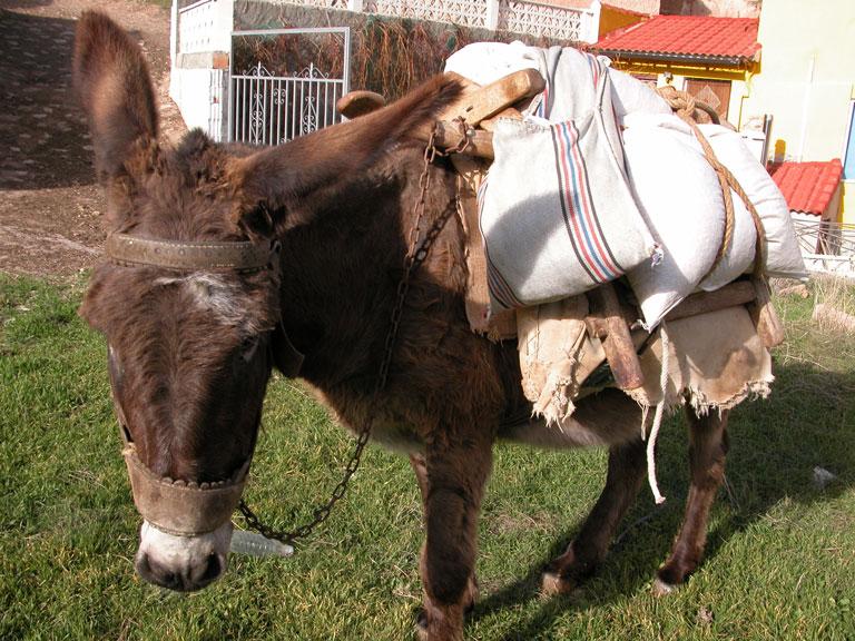 burro-ateca.jpg