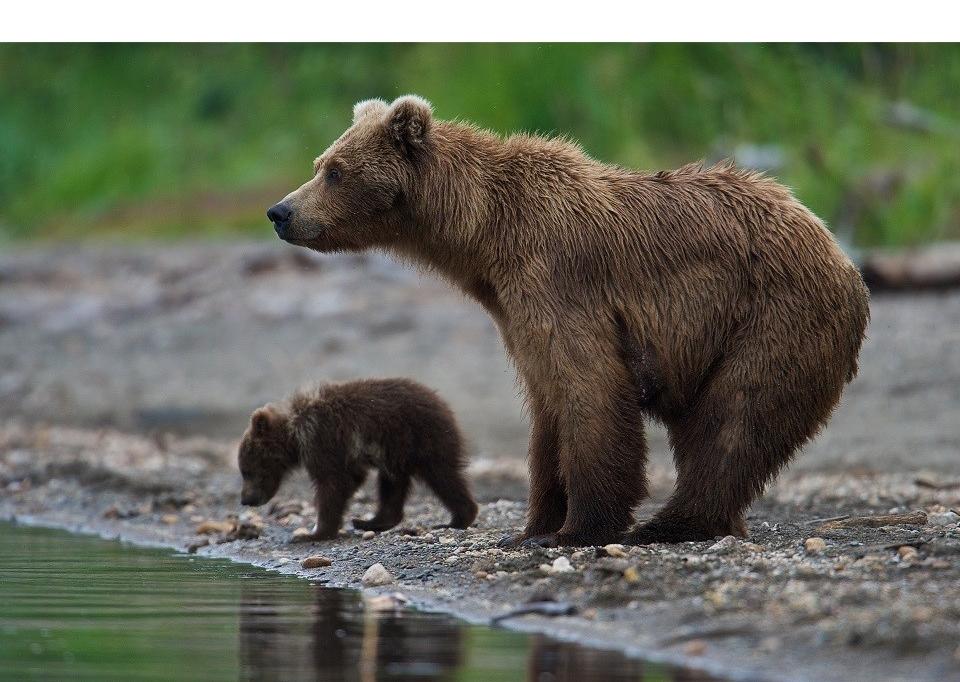 KATM_Bears.jpg