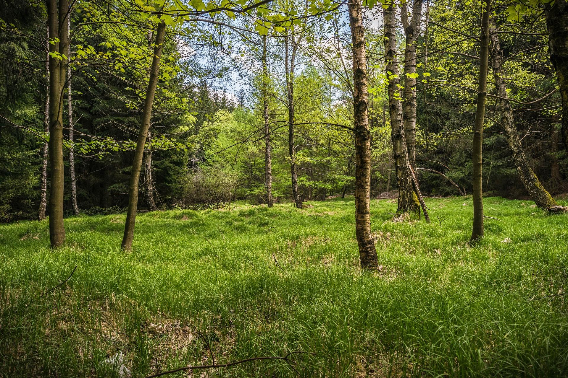 meadow-1379579_1920.jpg