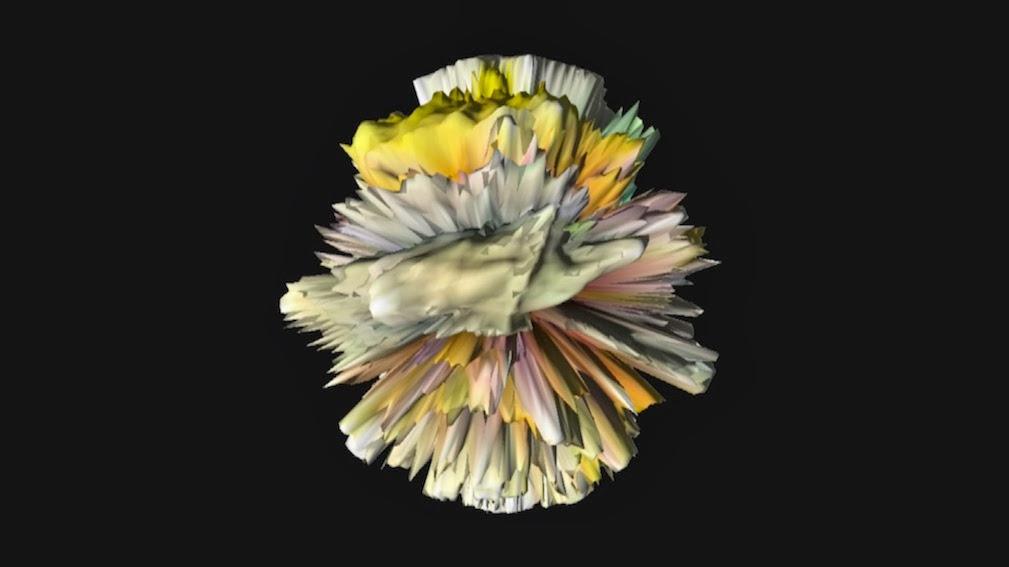 Windroeschen . anemone