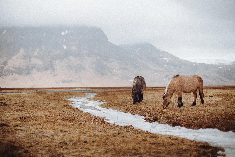 Iceland (54).jpg