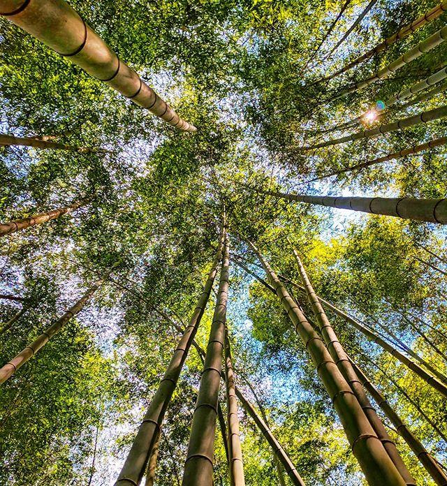 Bamboo Forest 🇨🇳 . . #China #chinatravel #travelchina #igerschina #bamboo #trees #nature #earth_shotz #earthfocus #earth #earthpix #earthpics #roamtheplanet #naturelovers #naturephotography #ourplanetdaily #traveldiaries #travelchannel #travelers #explorer