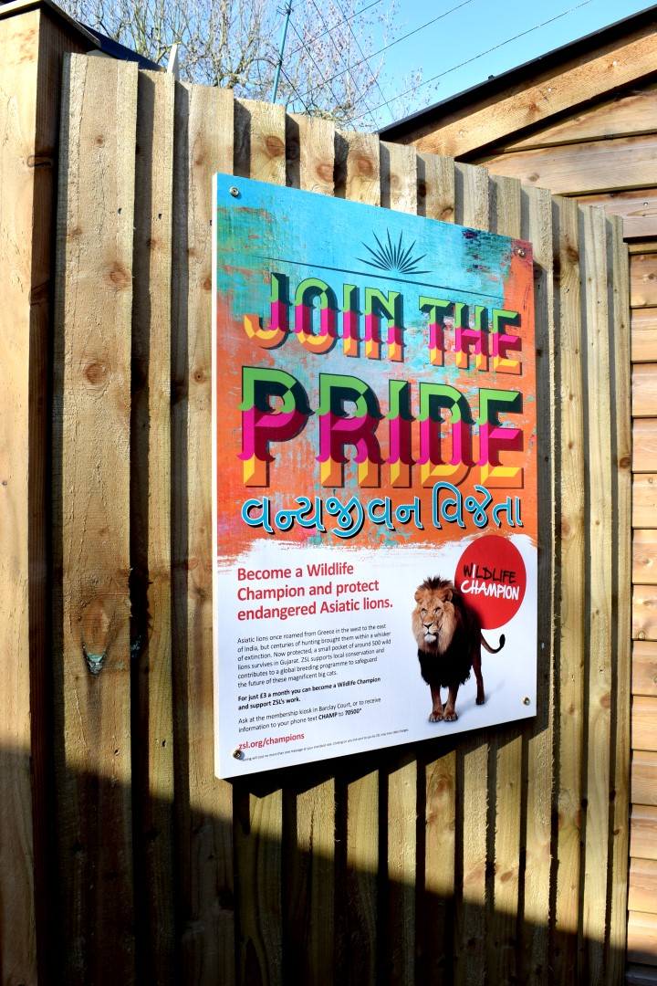 Print direct to plywood - Champion a Lion signage
