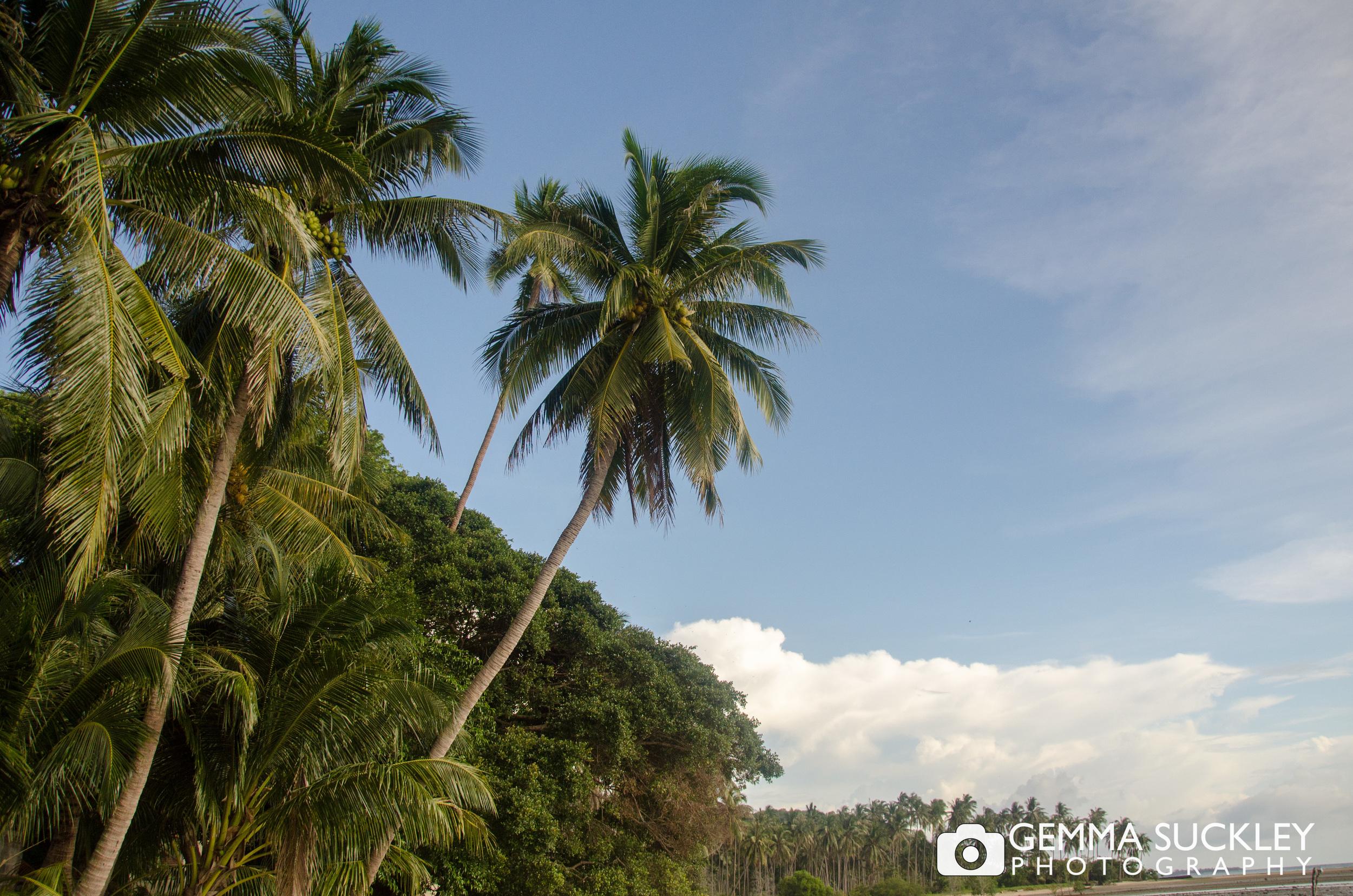 palm-trees-thailand.jpg