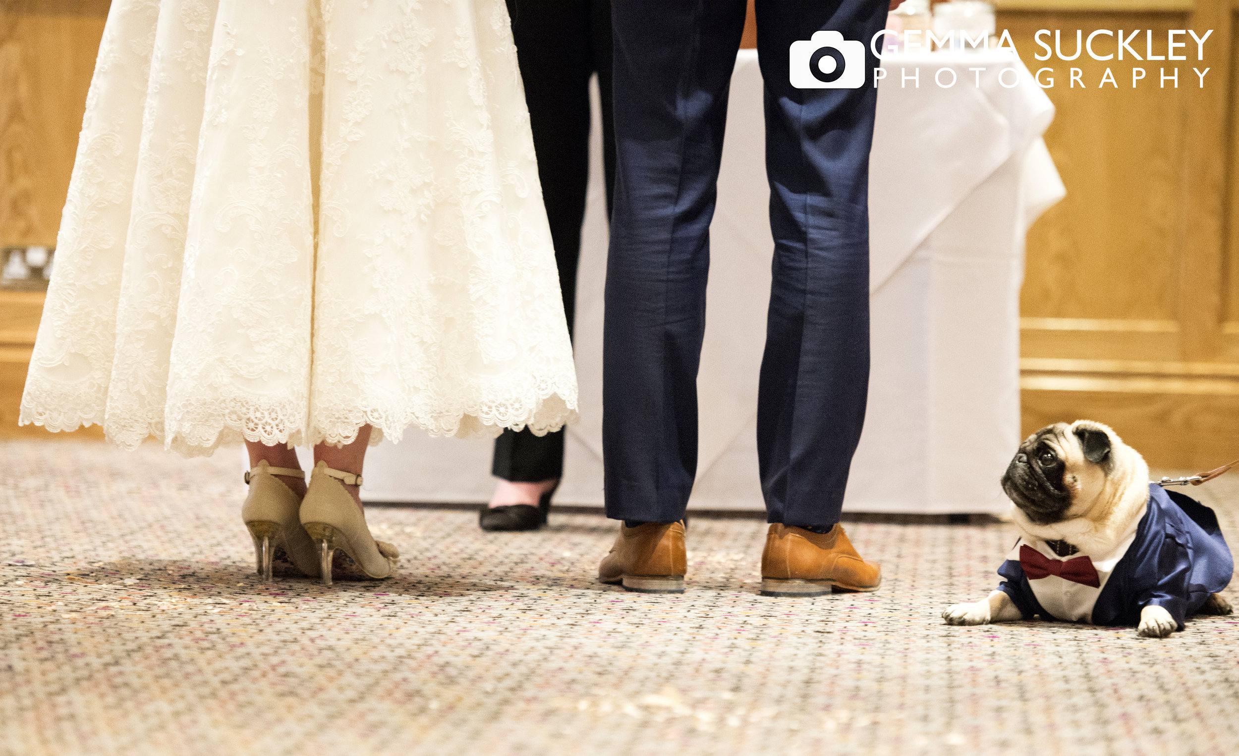 photo of Bride and groom's feet with a pug dog looking up