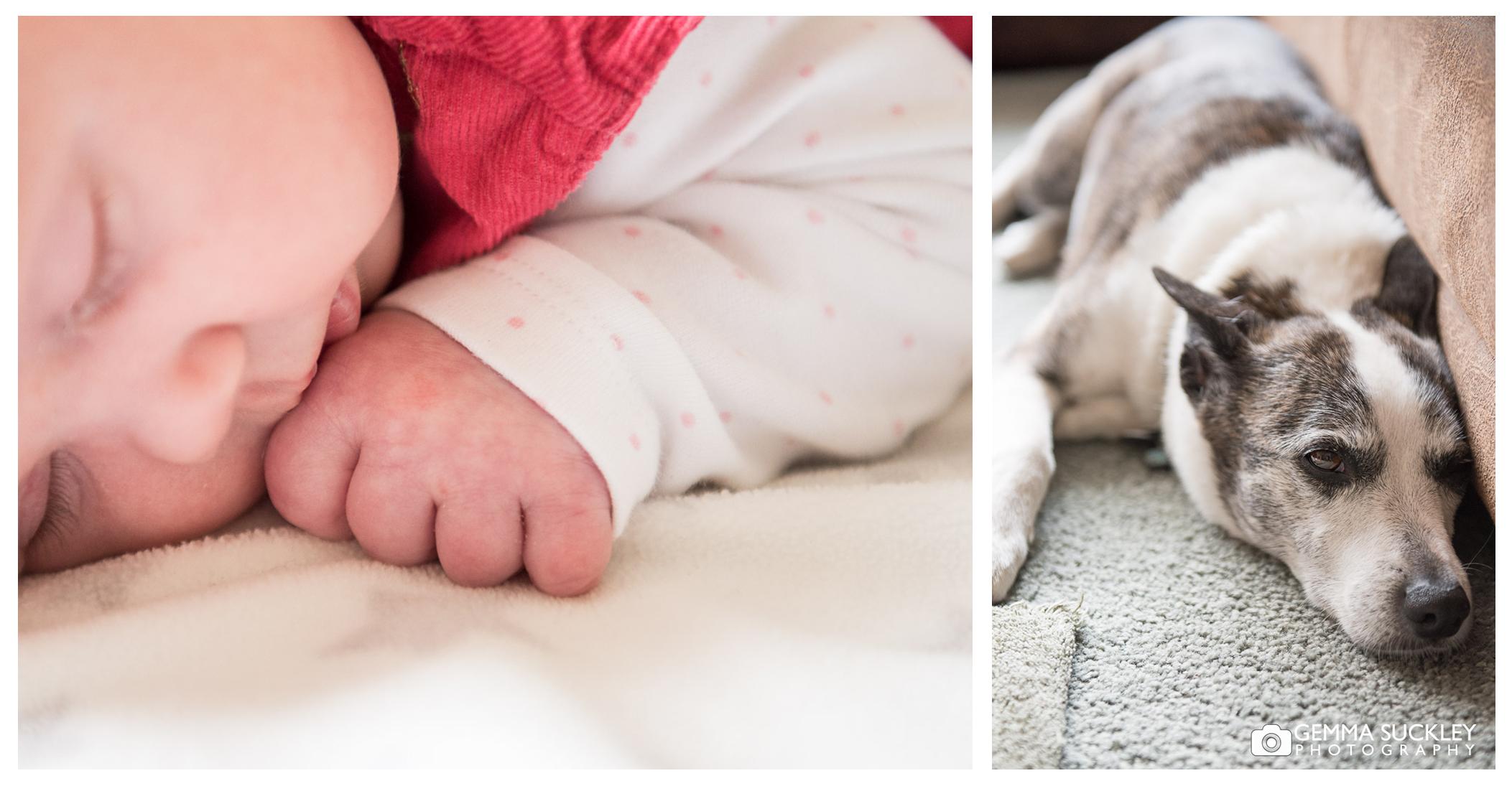 Newborn baby and dog family photos