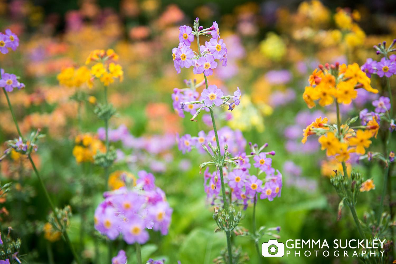 flowers at Golden Acre Park