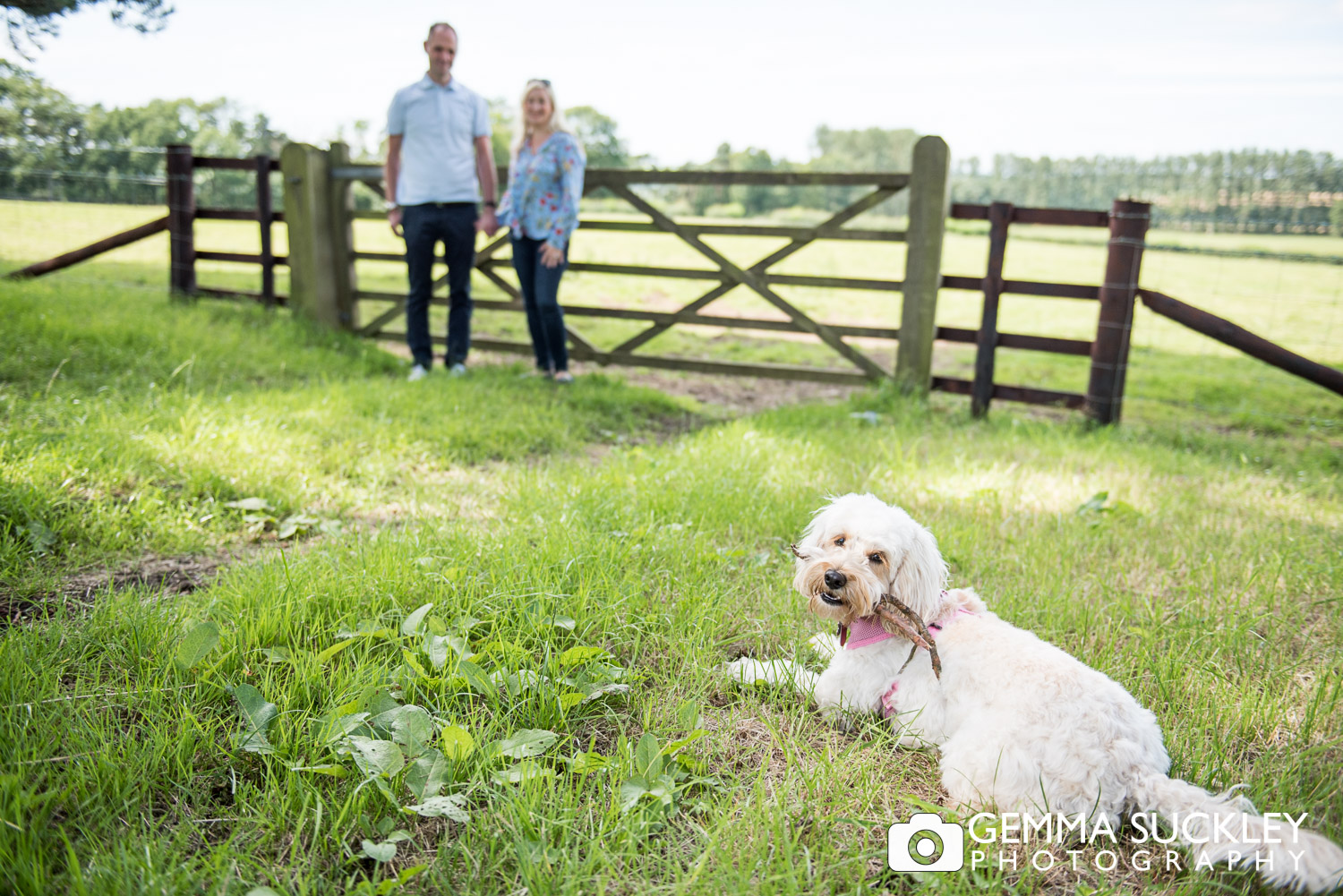 pre-wedding photo shoot of a couple and their dog in Leeds