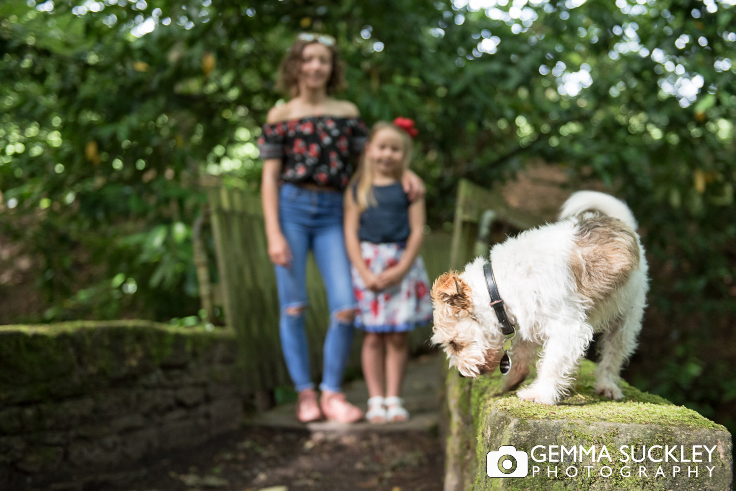 a dog jumping off a wall and ruining a family photo in skipton