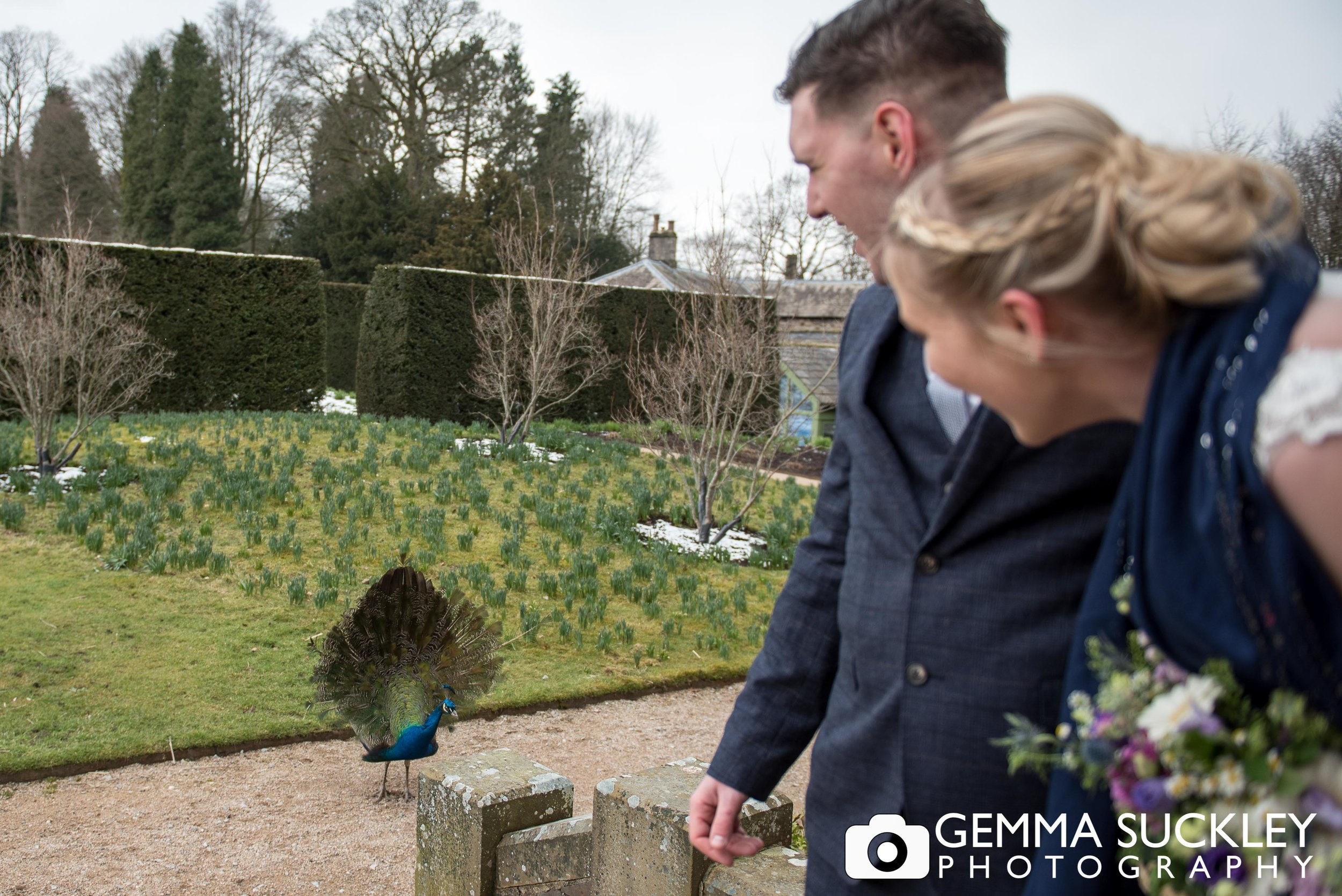 the broughton hall peacock display for the bride and groom