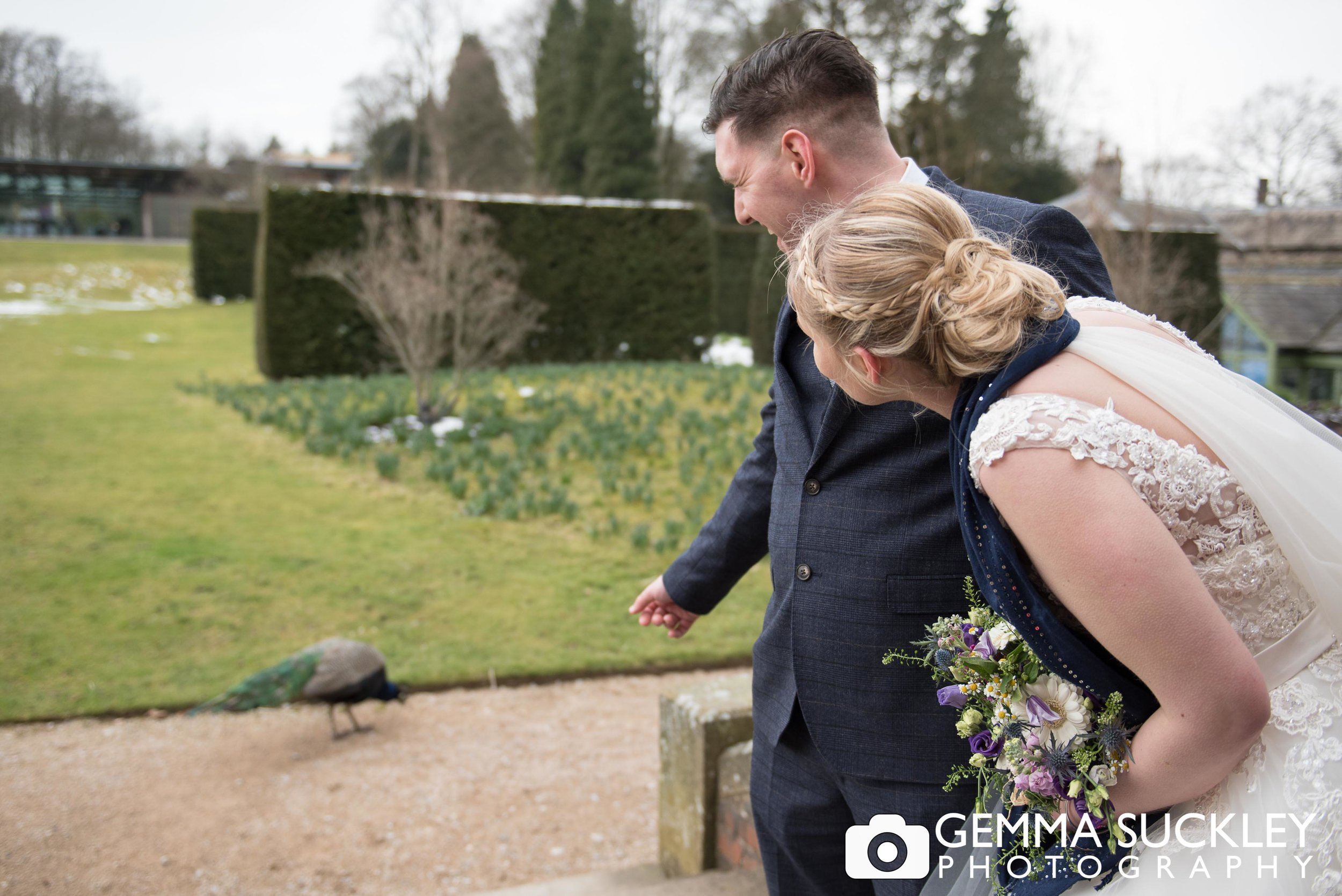 peacock-at-broughton-hall-wedding.jpg