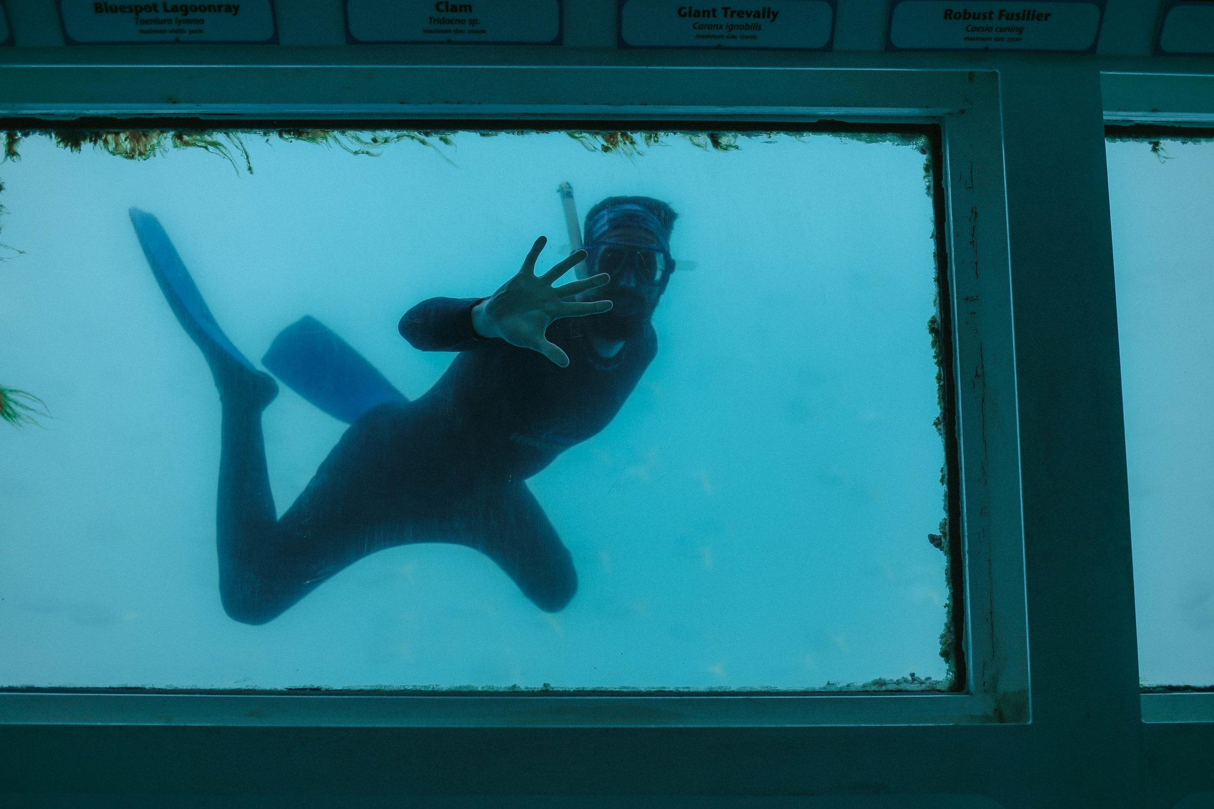 Great Barrier Reef Snorkeling (21 of 22).jpg