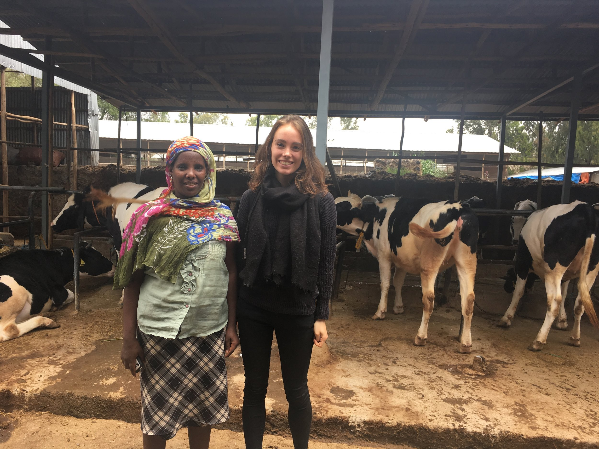 With a commercial dairy farmer in Debre Zeyit, a town established on the outskirts of Addis Ababa.