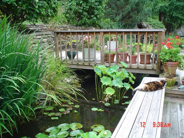 Tharpe Watergardens005.JPG