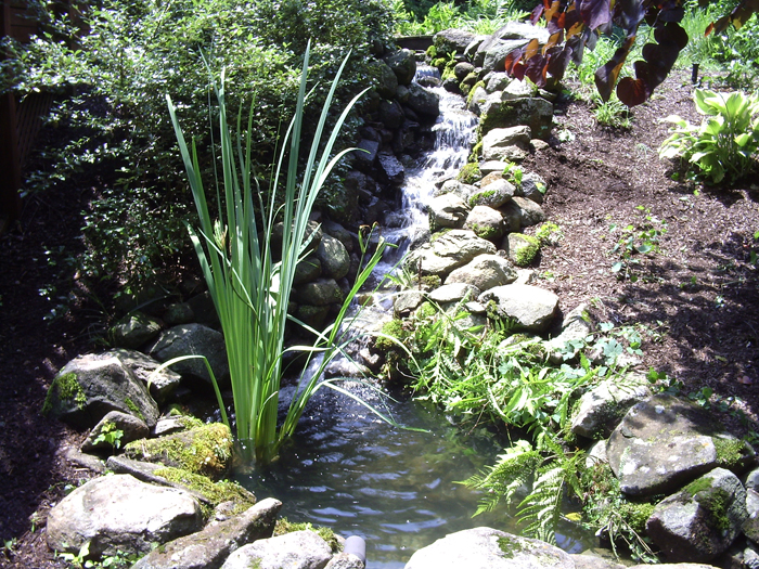 Tharpe Watergardens008.JPG