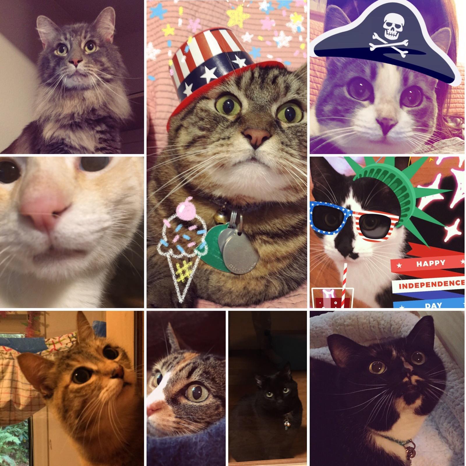 Summer Kitties 2017 pt 2