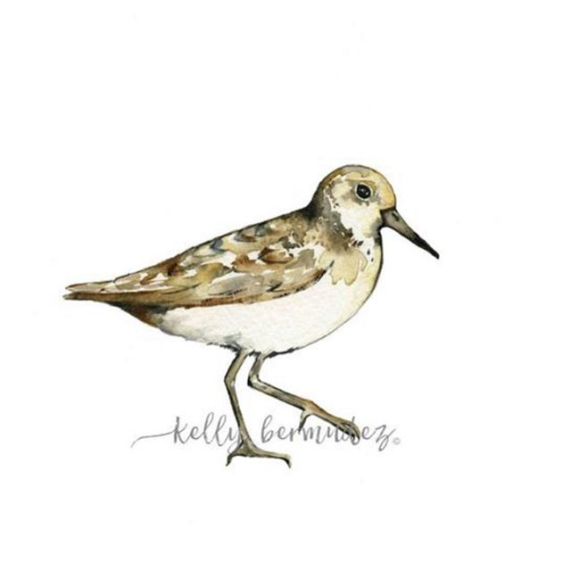 So ready to take a trip to the beach!! Love painting these little guys💜 #sandpiper #beachart #beachwedding #beach #beachdecor #watercolor #watercolour #painting #wallart #walldecorations #walldecor #beachy #beachhouse #beachhouseinteriors