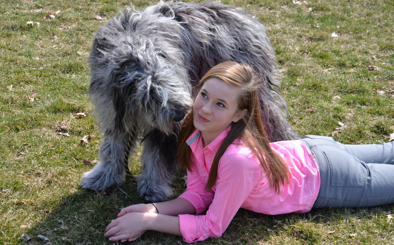 bergamascofamilydog
