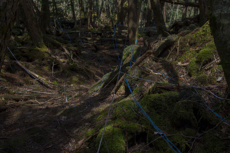 The forest floor is littered with a seemingly endless amount of coloured tape used to mark the locations of new found remains from suicide victims.