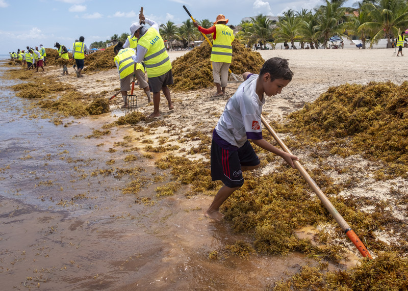 Sargassum — the Story INSTITUTE