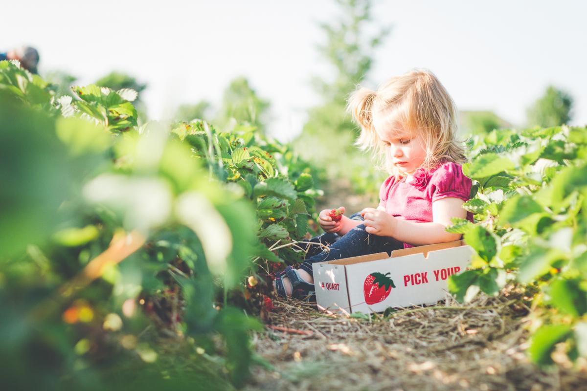 Strawberries-10.jpg