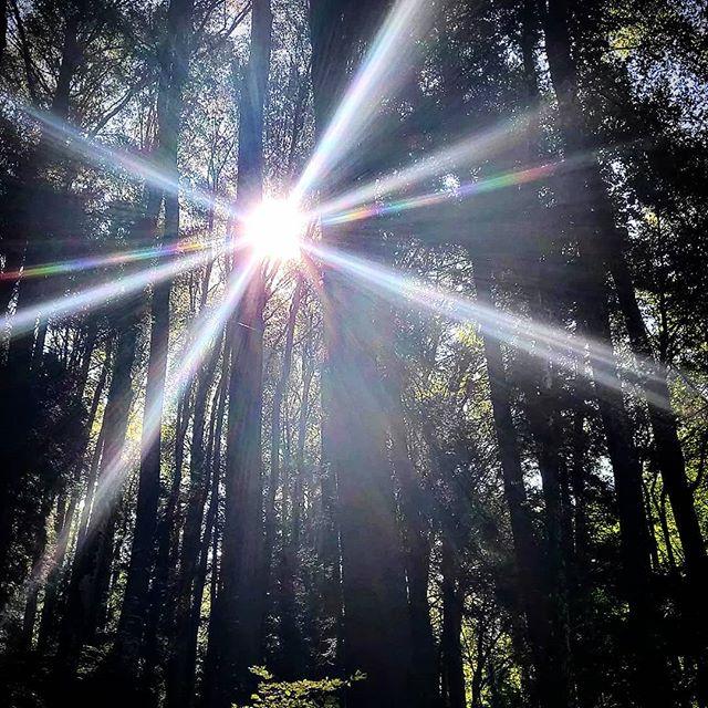 Nice hike through the #sagenraintobel . . . . . . #hiking #hikingswitzerland #zürichoberland #sunstar #forrest #lovinglife💞 #goodlife #pachamama