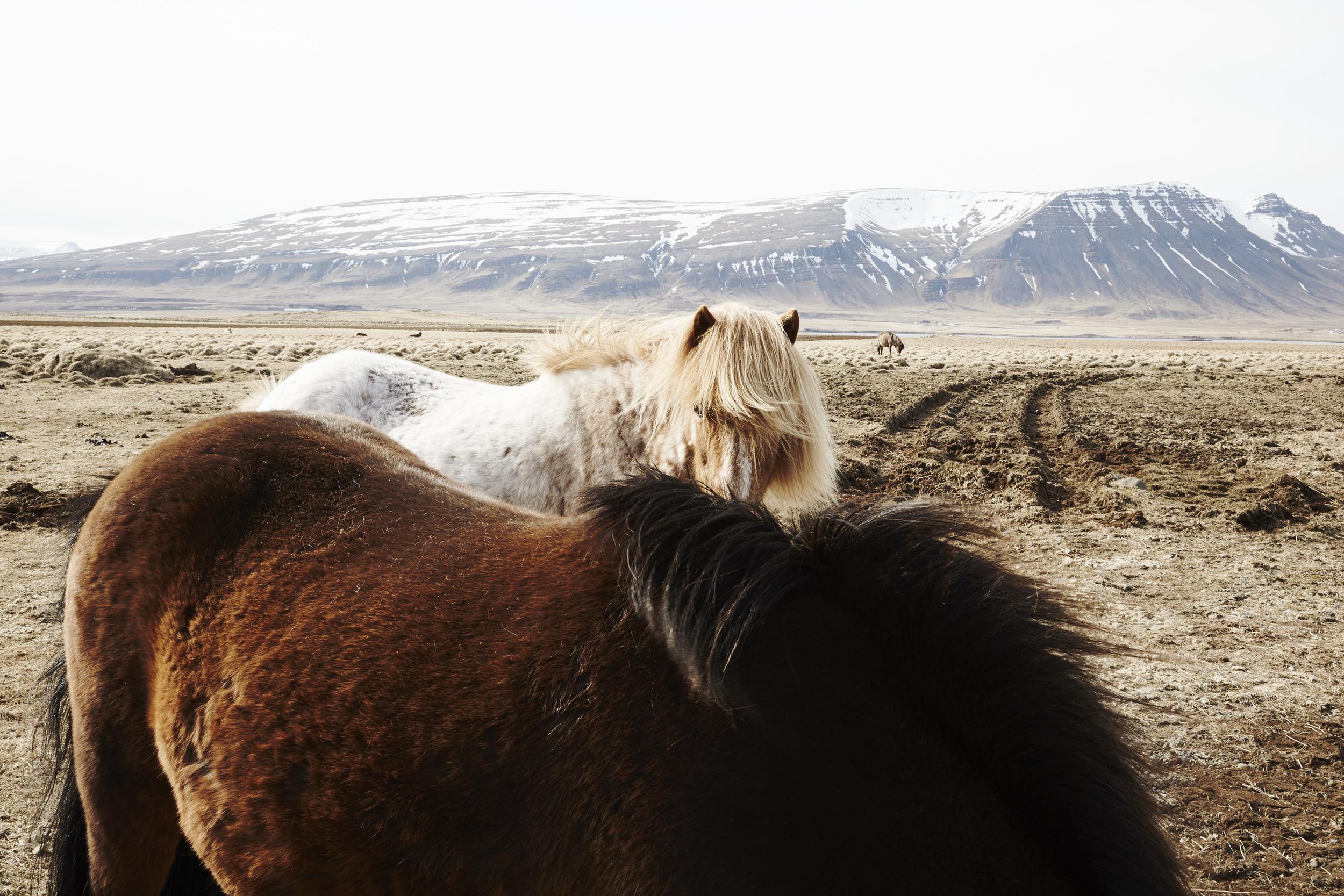 15_05_09_Iceland_West0009F.jpg