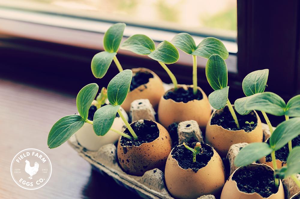 egg-shells-grow
