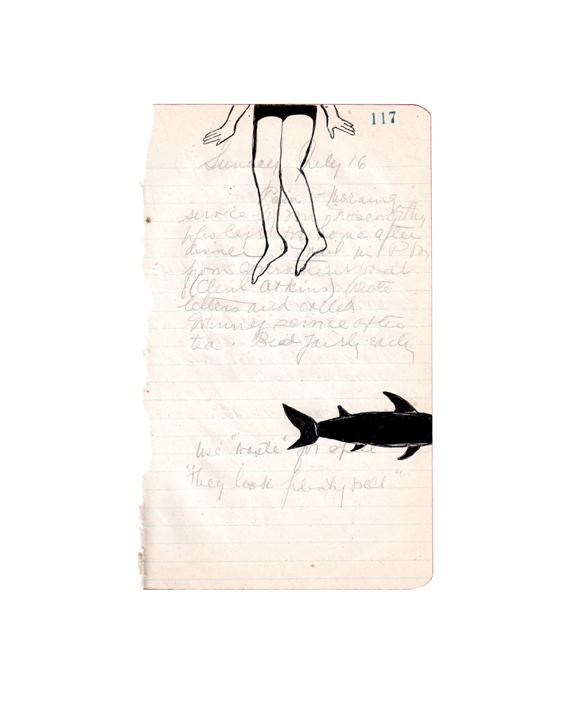 shark72.jpg
