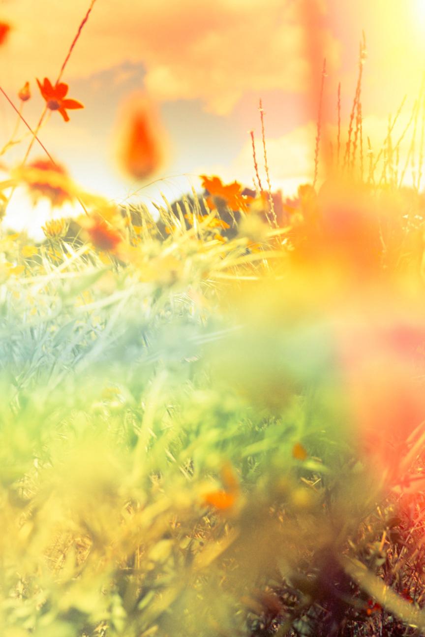 dee2b5c51e0ca5c2-garden4.jpg