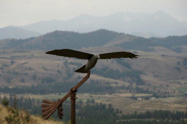 Hawk Close.jpg