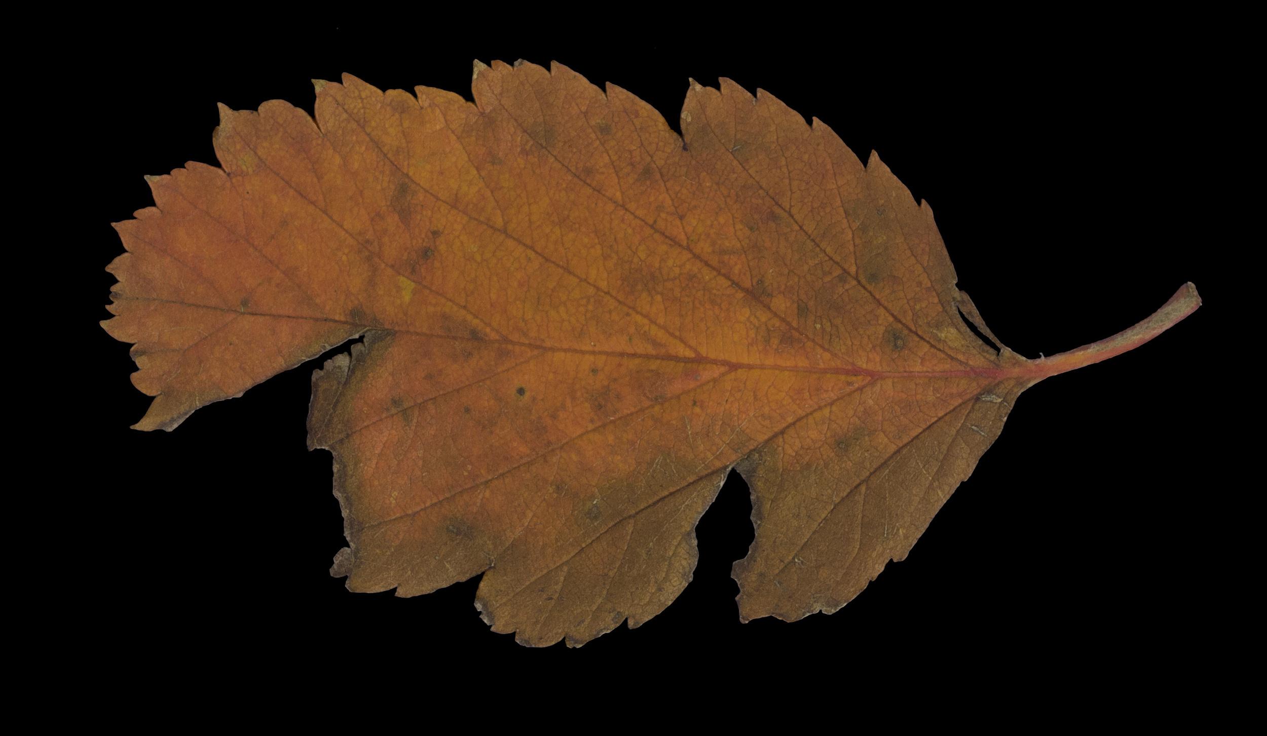 foliage_27.jpg