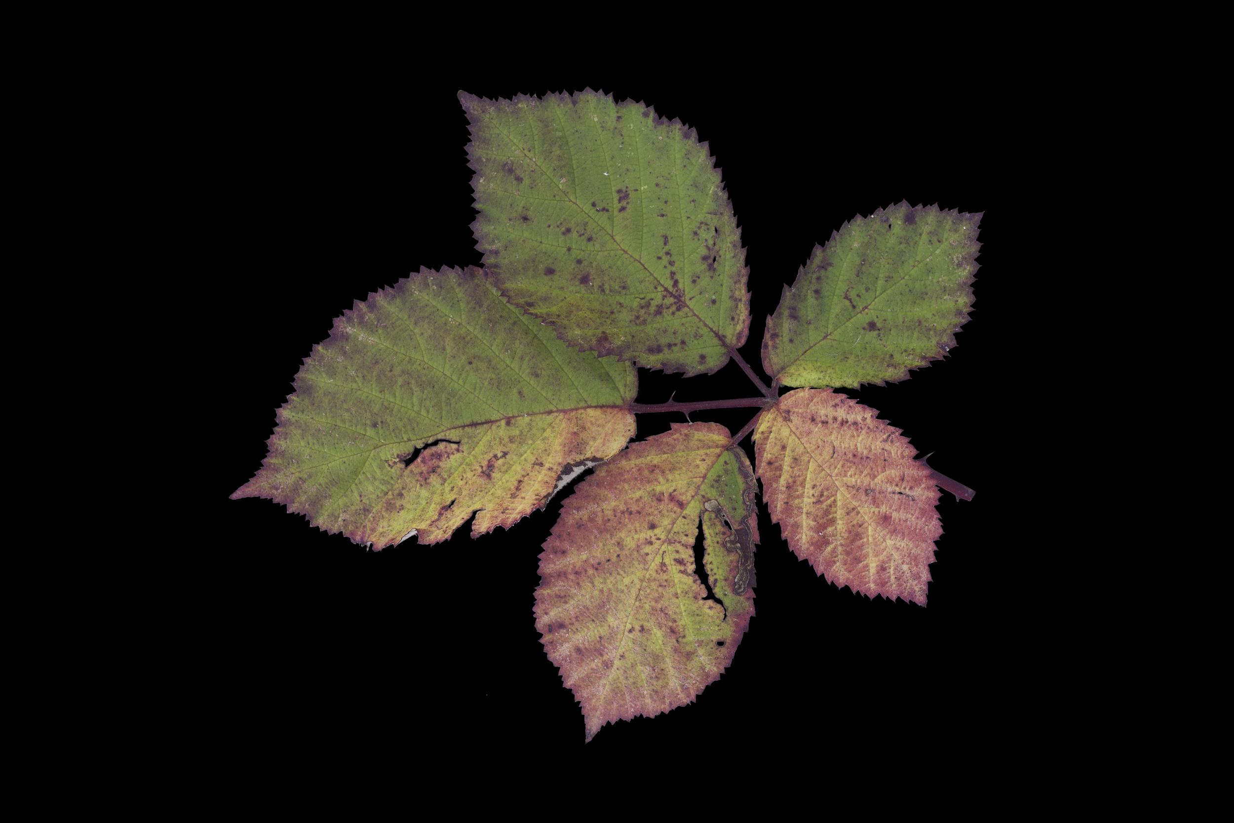 foliage_85.jpg