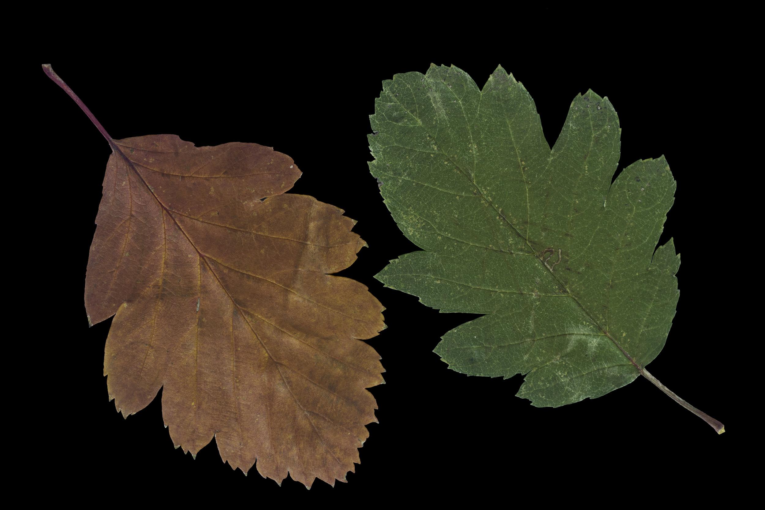 foliage_114.jpg