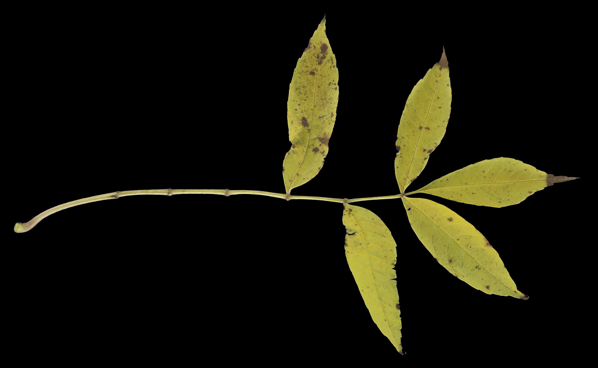 foliage_63.jpg