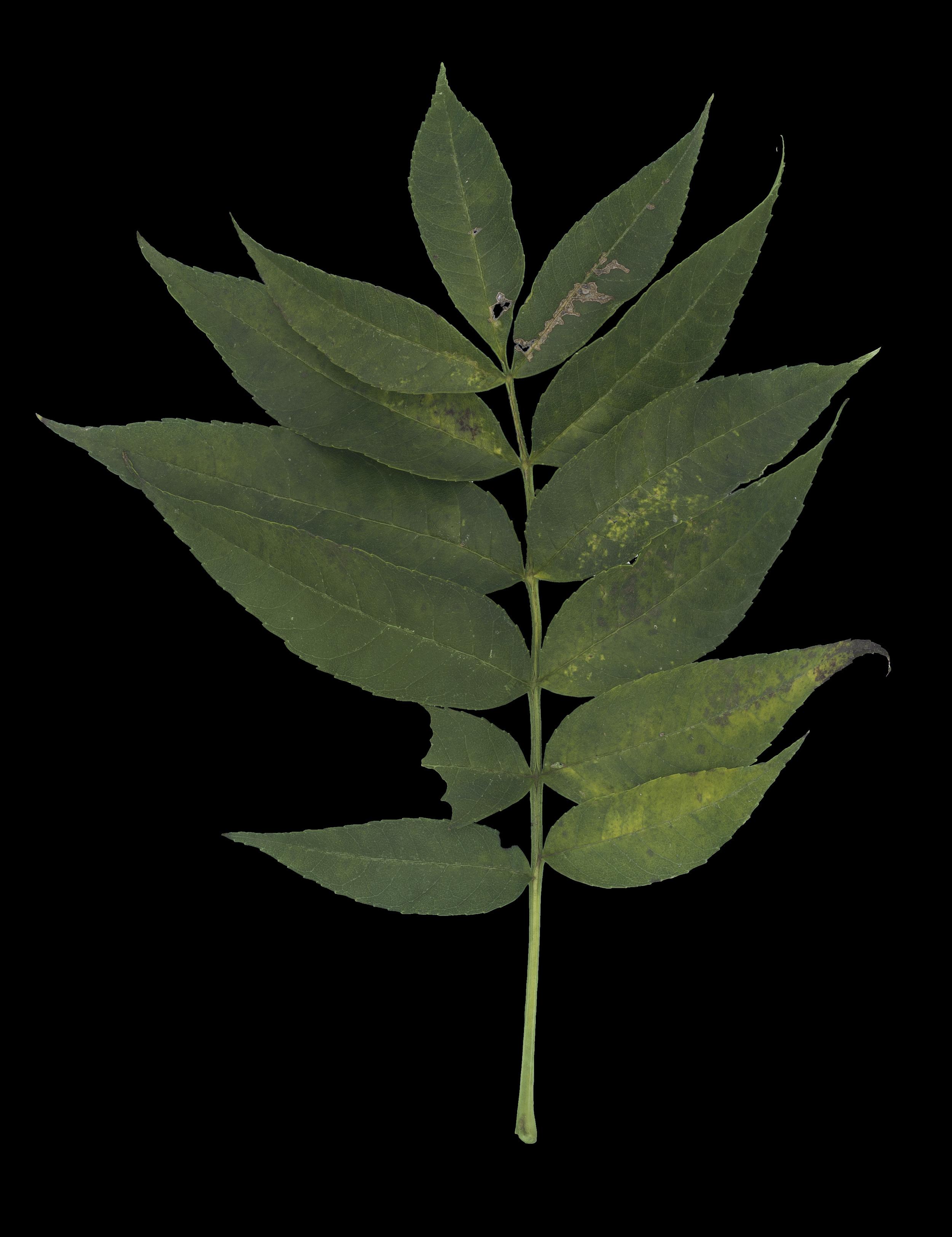 foliage_74.jpg