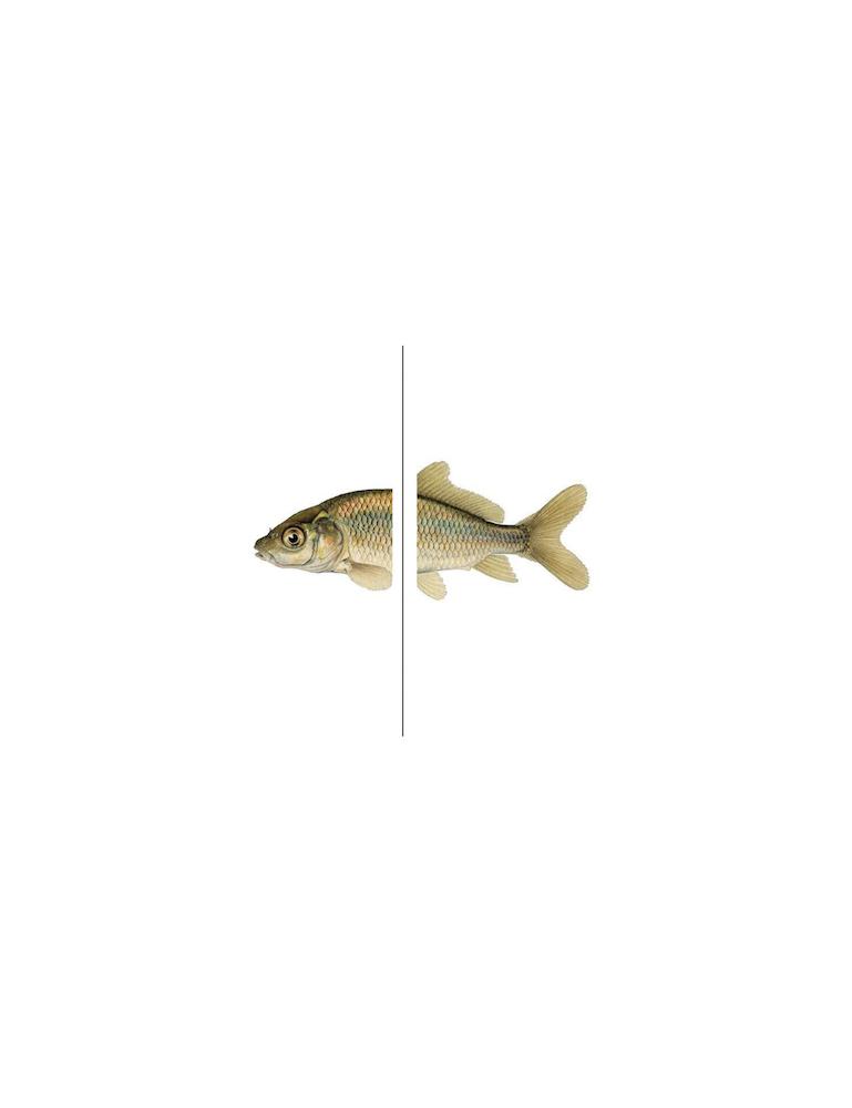 LR_fish psyche.png