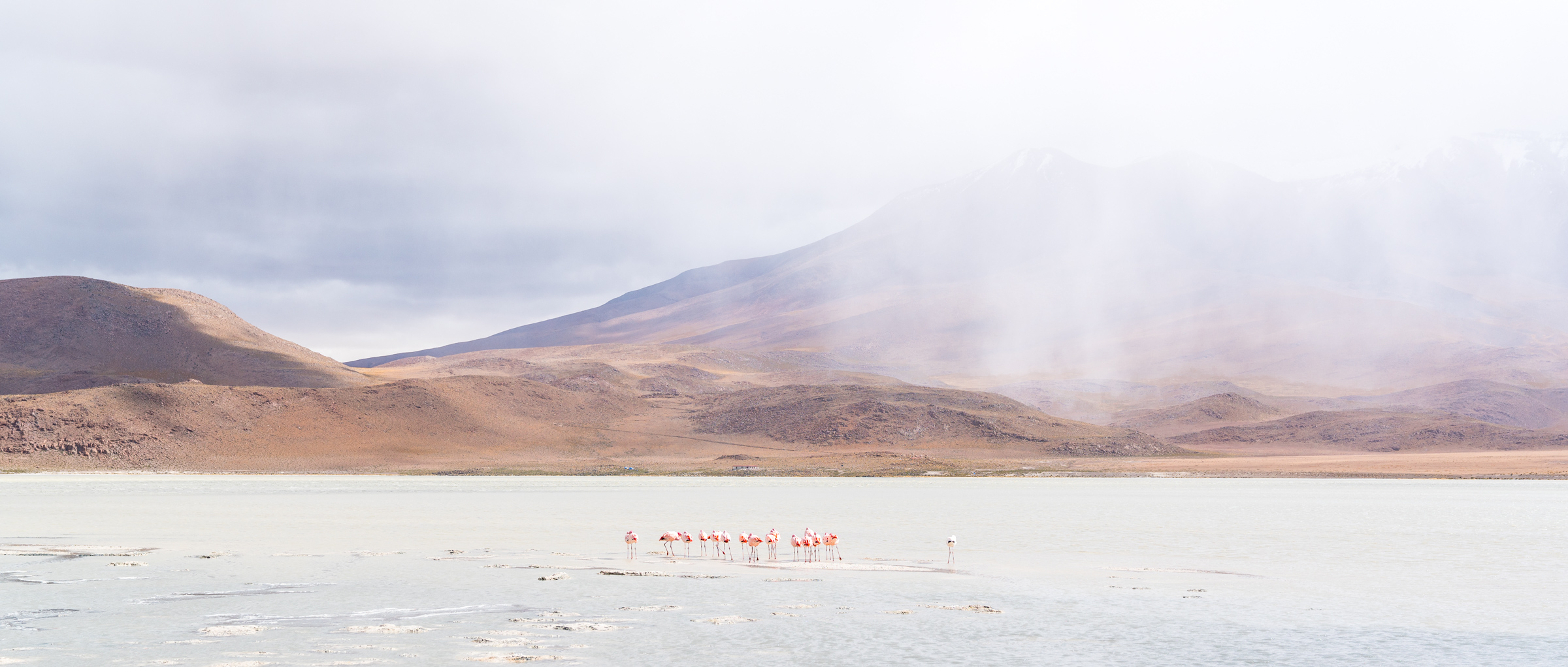 Small flock of Flamingoes brace themselves for an oncoming snow storm. Bolivia