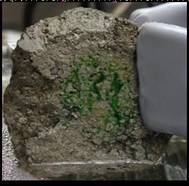 Spirulina algae happily growing on the original pervious concrete prototype.