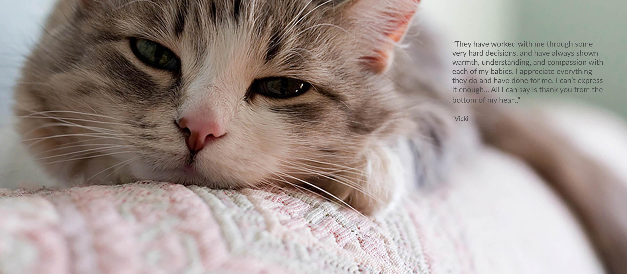 04 Cat.jpg