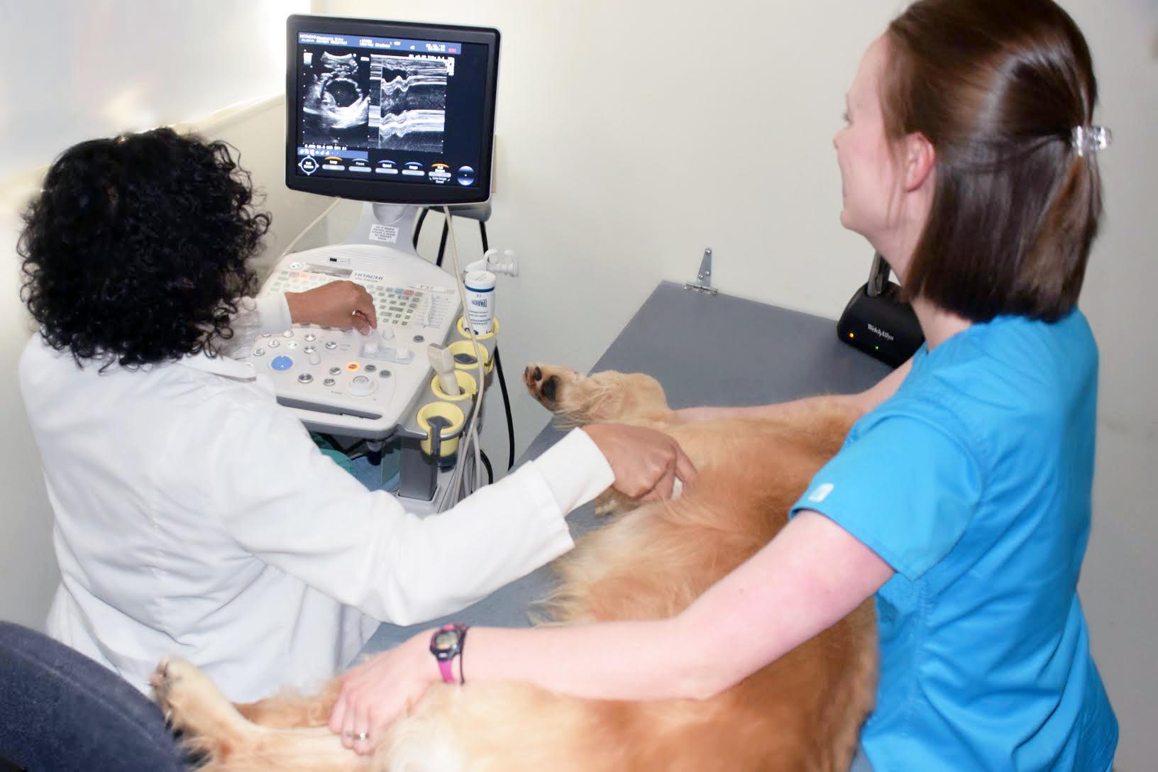 Dr. Cooper Ultrasound.jpg