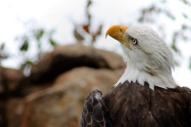 Majesty. Shot at Memphis Zoo. #whatsyournature @nature_org