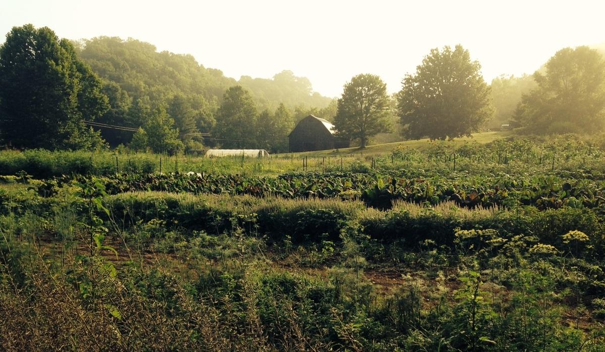 farm_sepia.jpg