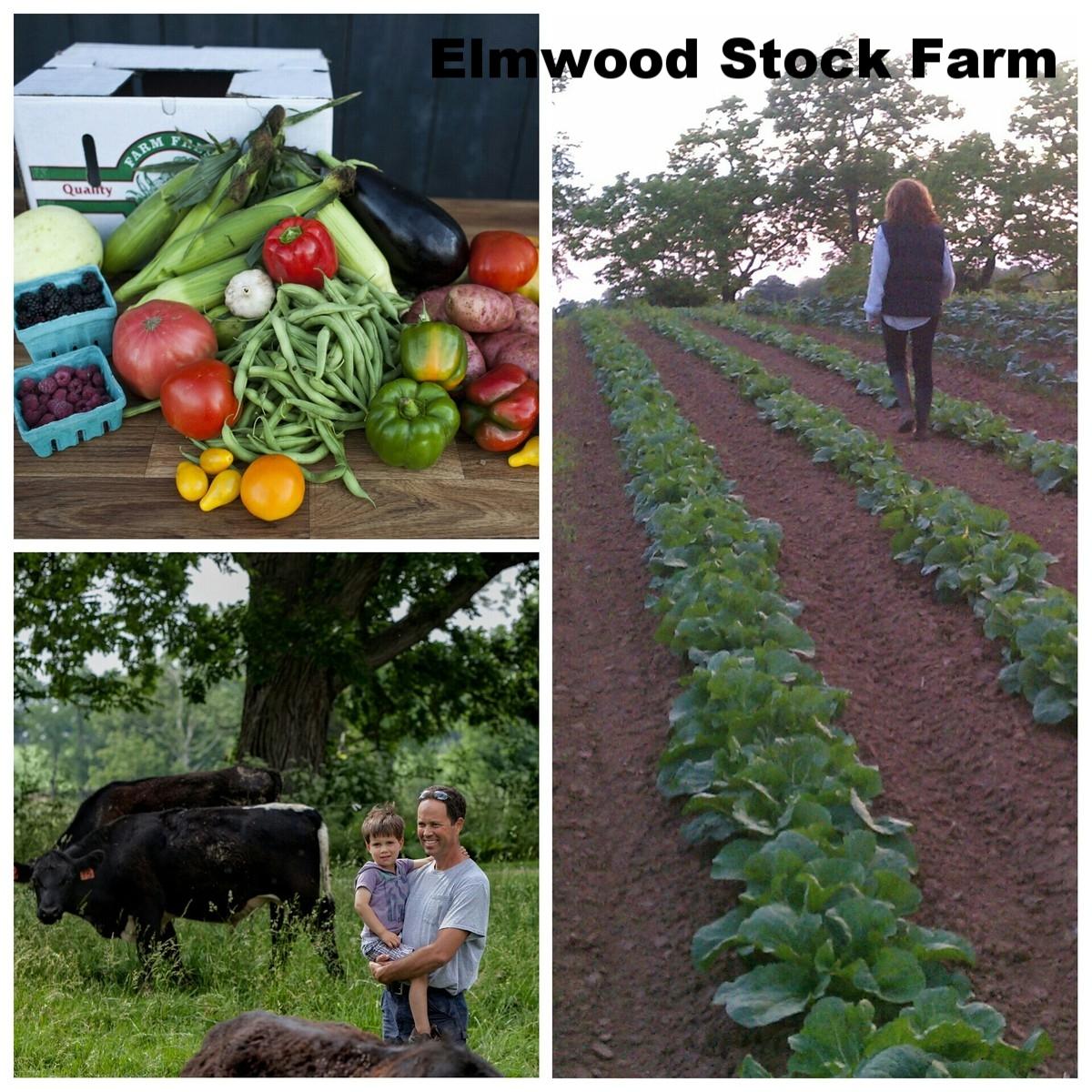 Elmwood_PhotoGrid.jpg