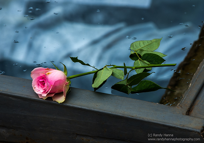 A rose lays on top of the 'open grave' display.   Nikon D4, 70-200mm f/2.8 @ 200mm, ISO 320, 1/250 sec at f/10.0