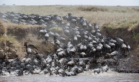 Wildebeest Crossing, Masai Mara, Kenya