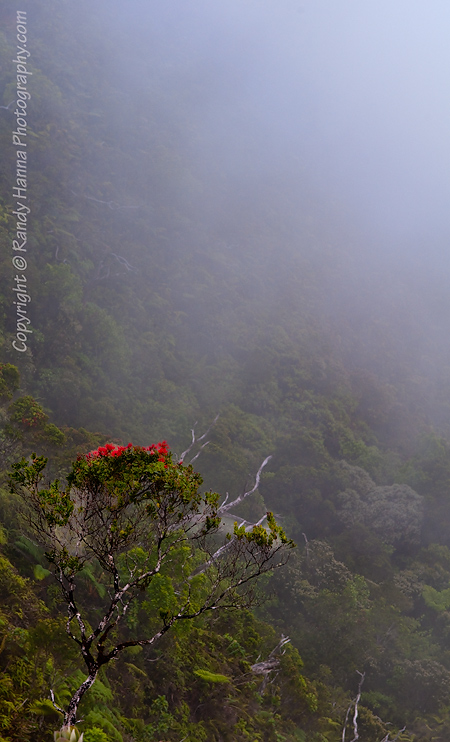 Kalalau Lookout Ridge Line Clouded in Fog