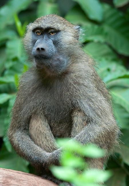 _k130467_monkey.jpg