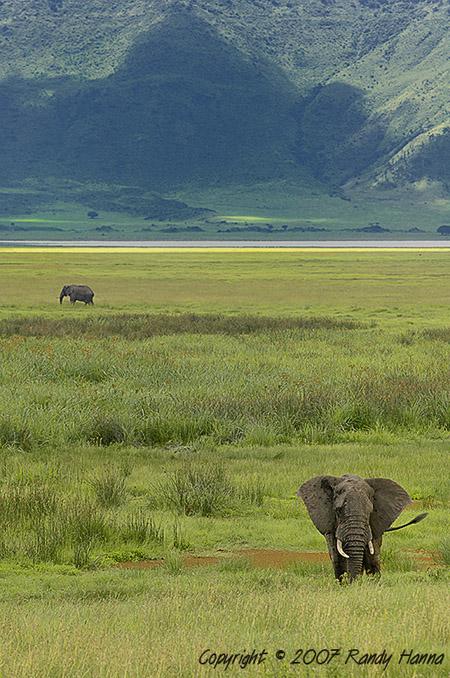 Ngorongoro Crater, Tanzania,Jan 2007  Nikon D2x, 200-400VR