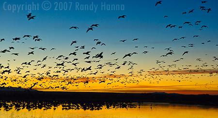 Bosque del Apache National Wildlife Reserve, New Mexico  Nikon D2x, ISO 400, 17-55mm @ 55mm, 1/60 sec at f5.6